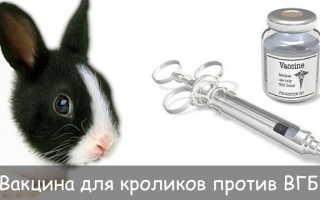 Вакцина для кроликов против ВГБК: правила постановки прививки, противопоказания и побочные реакции