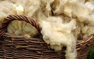 Полезные свойства овечьей шерсти, влияние на организм человека, правила обработки материала
