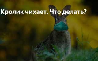 Что делать, если кролик чихает: правила лечения, меры профилактики