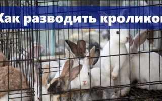 Как разводить кроликов: выбор породы, правильное обустройство места содержания