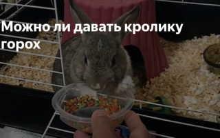 Можно ли кроликам давать горох