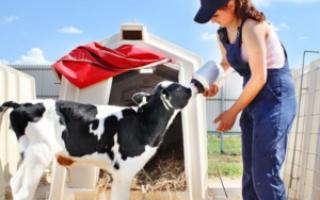 Заменители цельного молока для телят: состав, правила использования, выбор качественного ЗЦМ