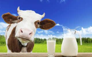 Состав коровьего молока, польза и вред продукта, калорийность