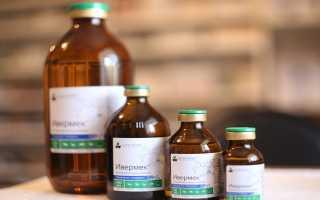 Ивермек для КРС: преимущества лекарства, правила применения, возможные побочные реакции