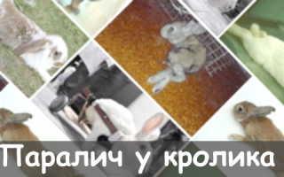 Паралич у кролика: правила лечения, первые симптомы