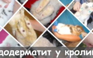 Пододерматит у кроликов: причины заболевания, методы лечения, меры профилактики