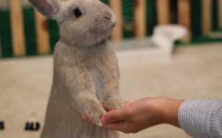 27 интересных фактов о кроликах