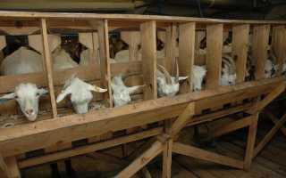 Разновидности кормушек для коз, пошаговый процесс изготовления, необходимые инструменты