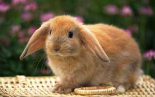 Имена для декоративных кроликов