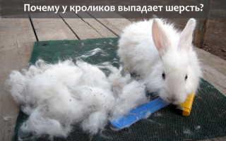 Почему у кроликов выпадает шерсть: причины облысения, первые признаки опасных заболеваний