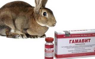 Способы и правила использования Гамавита для кроликов
