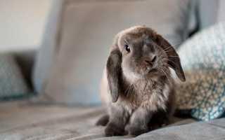 Все о домашних кроликах – особенности содержания в квартире