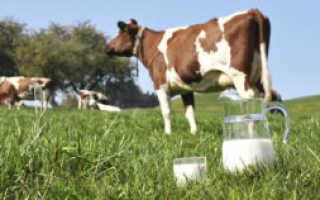 Почему у коровы мало молока: причины снижения надоев, возможные заболевания