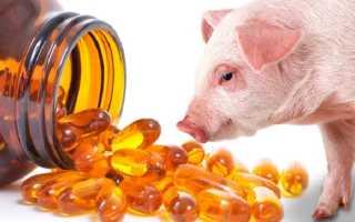 Рыбий жир для поросят: польза добавки, правильный выбор дозировки, режим приема