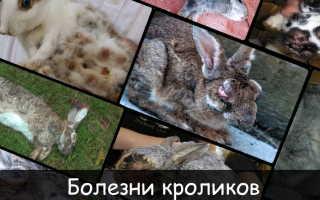 Болезни кроликов: первые симптомы, эффективные методы лечения