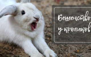 Бешенство у кроликов: симптомы, методы лечения, правила вакцинации