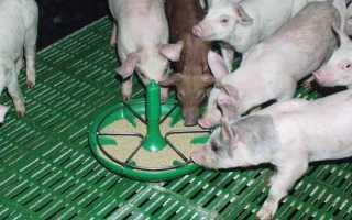 Разновидности корыт для свиней, пошаговый процесс изготовления своими руками