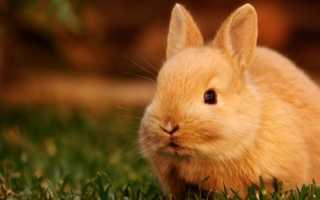 Витамины для кроликов – какие элементы помогут укрепить здоровье
