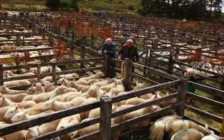 Загон для овец: классификация, основные требования к помещению, пошаговый процесс постройки овчарни