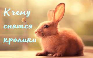 Толкование сна с кроликами: расшифровка сновидения по популярным сонникам