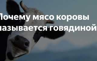 Почему коровье мясо называют «говядиной»: происхождение слова, его современное значение