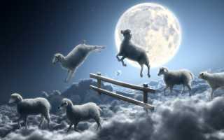 Что обозначают овцы в сновидениях: трактовка по разным сонникам, правильная расшифровка сна