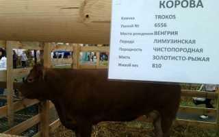Критерии подбора имени для коровы и быка (список кличек по алфавиту)
