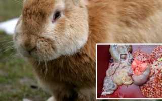Как давать йод кроликам для профилактики и лечения заболеваний