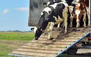 Основные правила погрузки и выгрузки, виды транспорта для перевозки коров