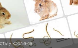Причины появления глистов у кроликов, меры профилактики