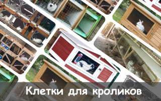 Клетки для кроликов: разновидности конструкций, пошаговый процесс строительства вольеров