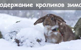Условия содержания кроликов зимой: обустройство вольера, составление рациона