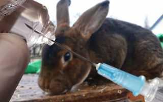 Вакцина для кроликов – эффективная защита для пушистого поголовья