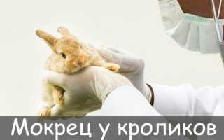 Мокрец у кроликов: симптомы заболевания, методы лечения и профилактики