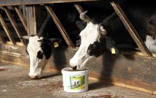 Фелуцен: показания к применению для коров и телят, правила введения в рацион