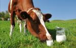 Молочные коровы: список самых популярных пород, их характеристики и особенности выращивания