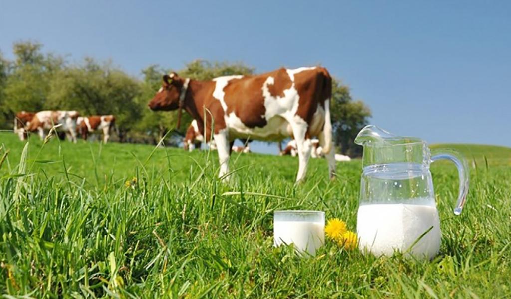 Жирность молока коров айрширской породы составляет 4,2%