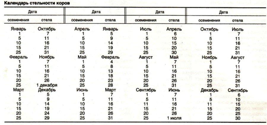 Календарь стельности коров