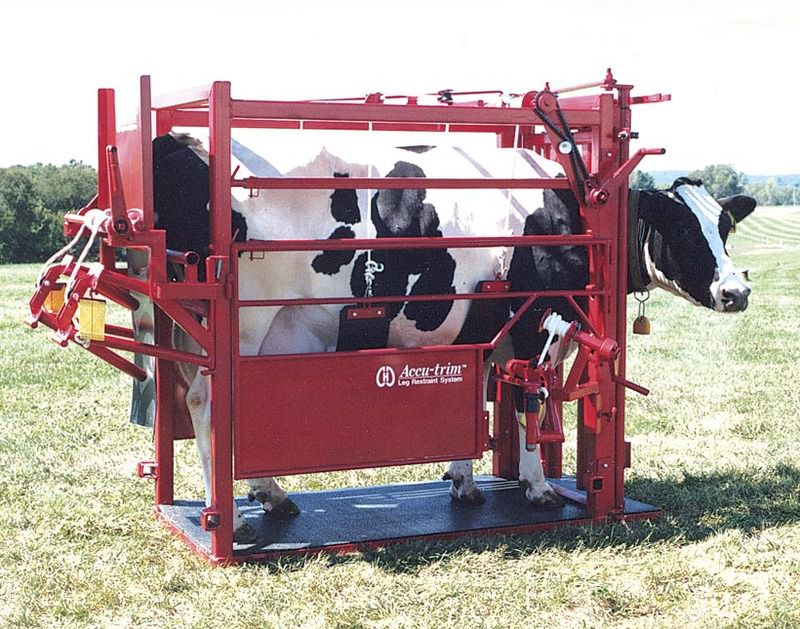 Станок с фиксаторами для искусственного осеменения коров