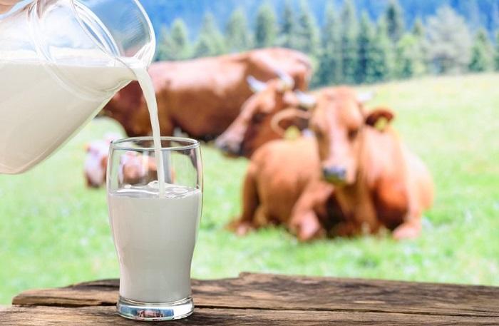 Коровье молоко красной коровы