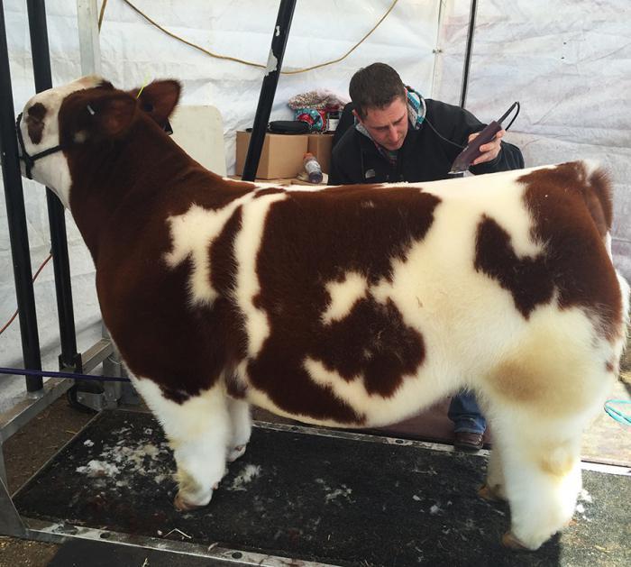 Стрижка плюшевой коровы