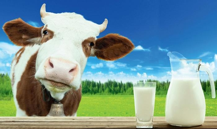 Корова и молок