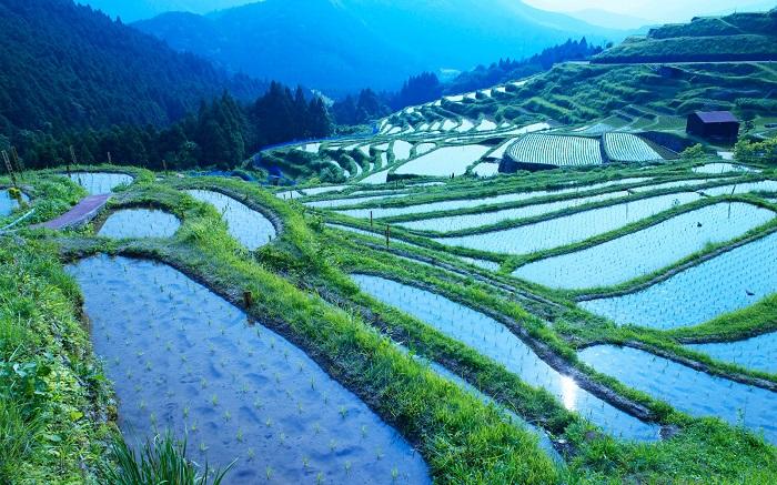 Сельское хозяйство в Японии