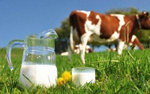 Как определяется норма плотности коровьего молока