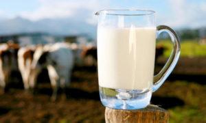 Почему молоко у коровы соленое