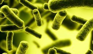 Возбудитель инфекции колибактериоза