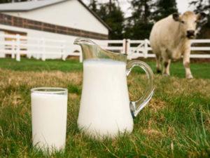 Что влияет на качество молока?