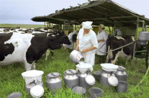 Увеличить удой коровы