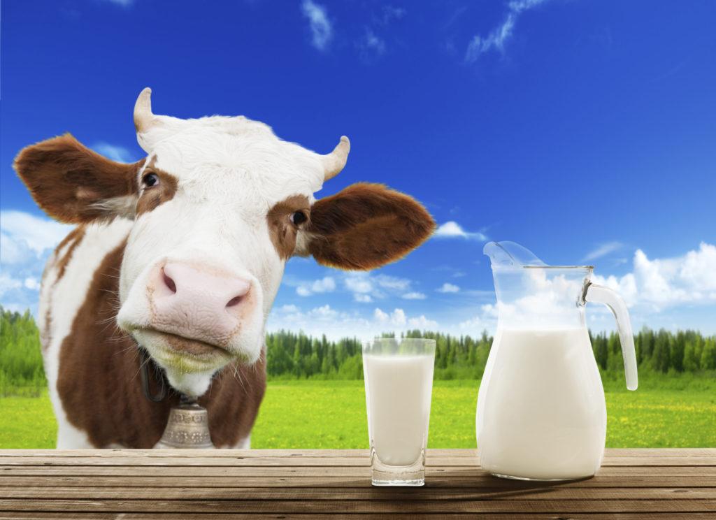 Состав коровьего молока