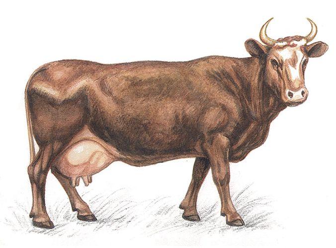 Нарисованная корова